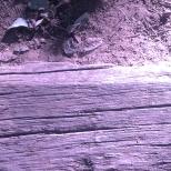 legno viola