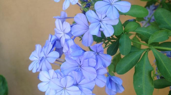 lilac summer yellowsubwoofer